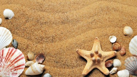 Sand Sales : Telangana's SSMMS Made Easy to Understand